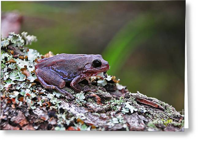 Al Powell Photography Usa Greeting Cards - Tree Frog on an Old Log Greeting Card by Al Powell Photography USA