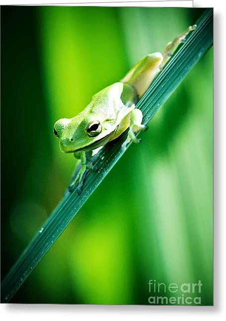 Nature Center Greeting Cards - Tree Frog Portrait Greeting Card by Katya Horner