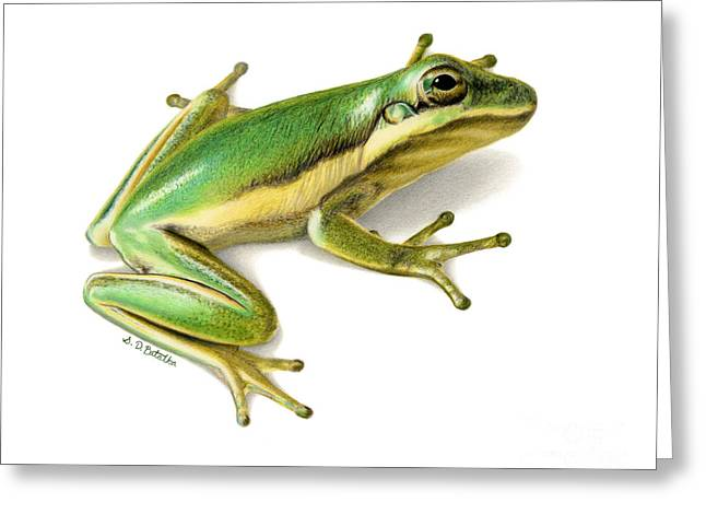 Drawing Color Pencils Drawings Greeting Cards - Green Tree Frog Greeting Card by Sarah Batalka