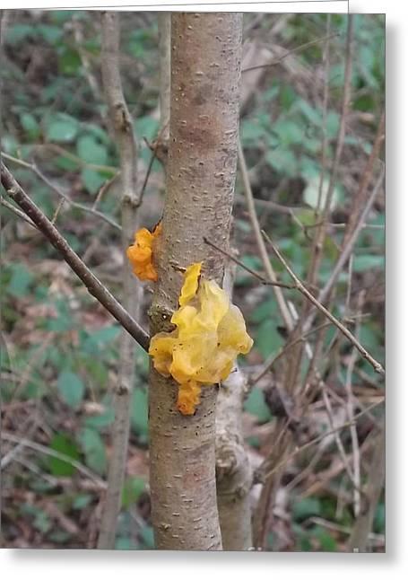 Tree Fungus Greeting Card by John Williams