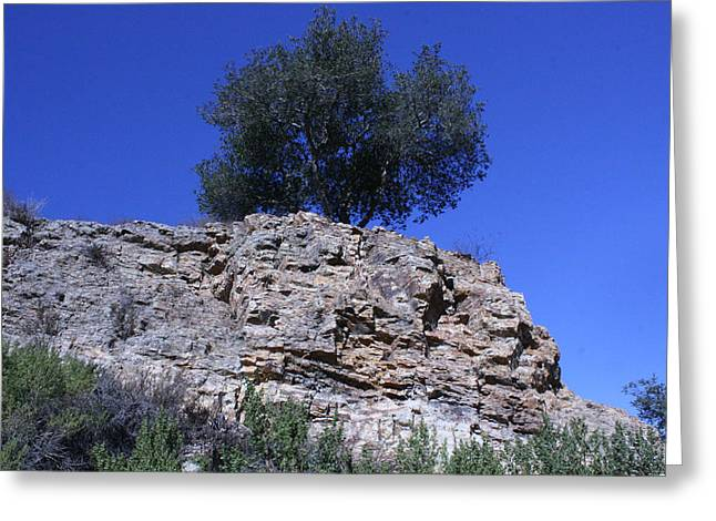 Marsha Ingrao Greeting Cards - Tree Growing in Rock Greeting Card by Marsha Ingrao