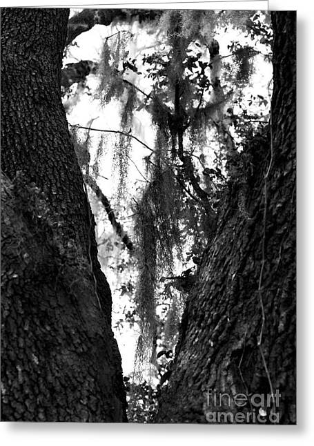 I Love America Greeting Cards - Tree Heart Greeting Card by John Rizzuto