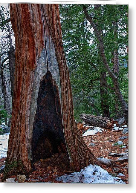 Featured Images Greeting Cards - Tree Hollow Greeting Card by Peter Tellone