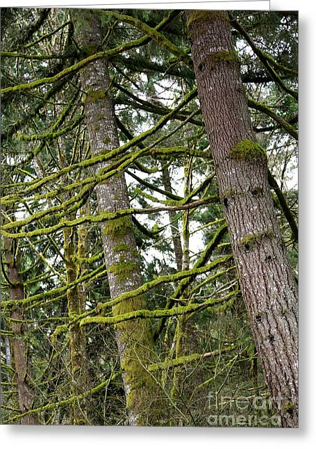 Mossy Trees Greeting Cards - Tree Hugger Greeting Card by Carol Groenen