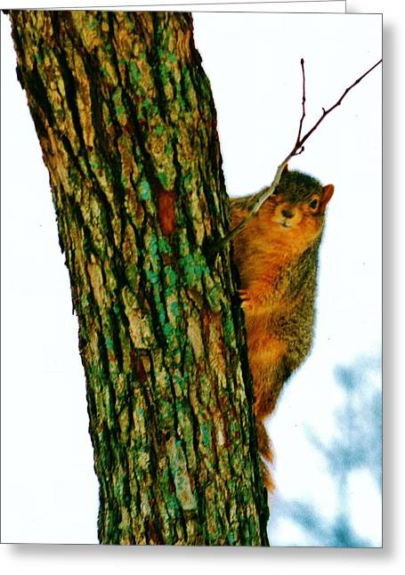 Tree Huggers Greeting Cards - Tree Hugger Greeting Card by Daniel Thompson