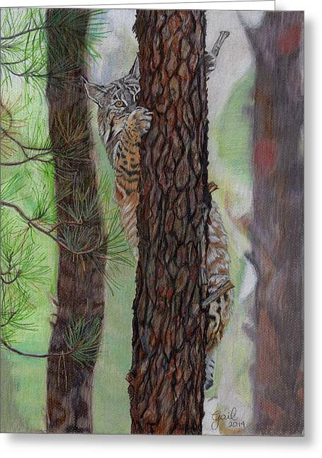 Recently Sold -  - Bobcats Greeting Cards - Tree Hugger Greeting Card by Gail Seufferlein