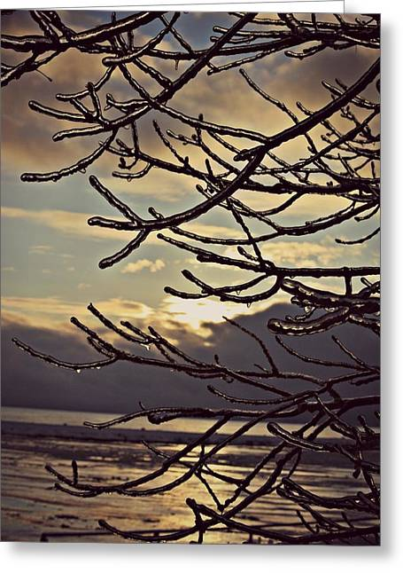 Winter Greeting Cards - Tree Icicle  Greeting Card by Dawdy Imagery
