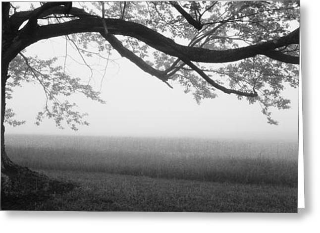 Farm Photography Greeting Cards - Tree In A Farm, Knox Farm State Park Greeting Card by Panoramic Images