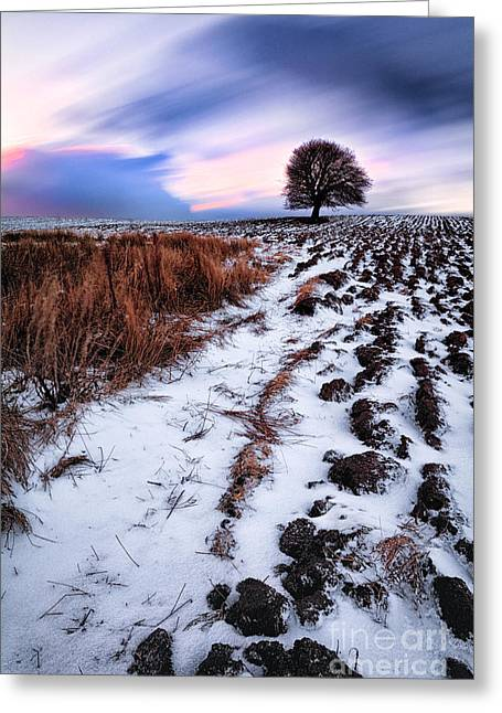 Fresh Snow Greeting Cards - Tree in a field  Greeting Card by John Farnan