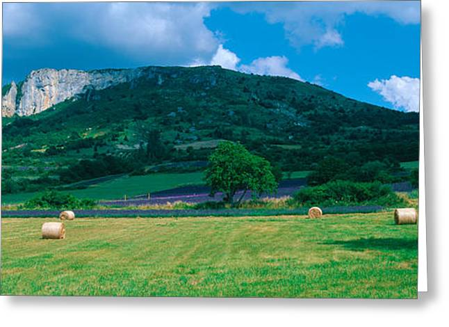 Provence Village Photographs Greeting Cards - Tree In A Field, Mevouillon Greeting Card by Panoramic Images