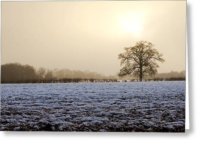 White River Scene Greeting Cards - Tree In A Field On A Snowy Day Greeting Card by Fizzy Image