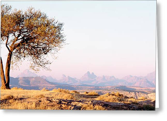 Ethiopia Greeting Cards - Tree In A Field With A Mountain Range Greeting Card by Panoramic Images