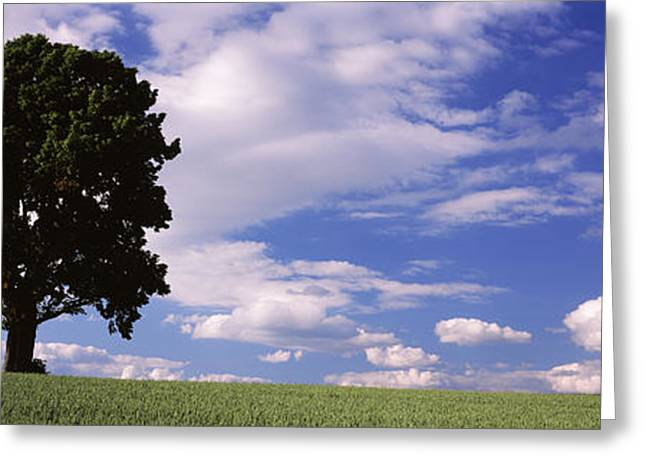 Women Only Greeting Cards - Tree In A Field With Woman Walking Greeting Card by Panoramic Images