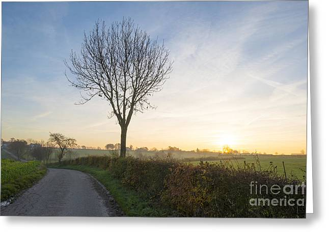 Limburg Greeting Cards - Tree in a hilly meadow at sunrise in autumn Greeting Card by Jan Marijs