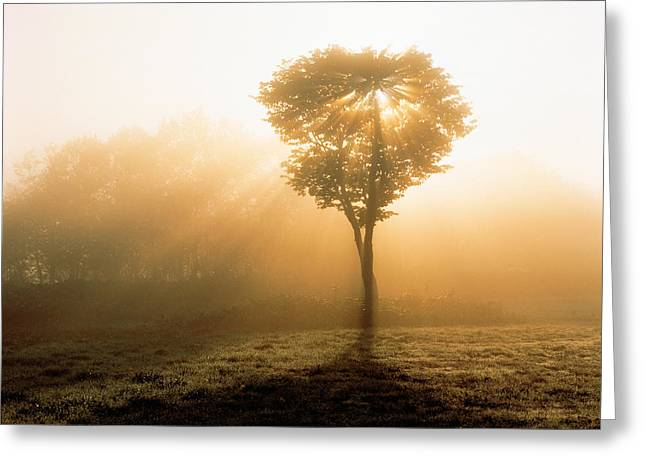 Serenity Scenes Landscapes Greeting Cards - Tree In Early Morning Mist Greeting Card by Panoramic Images