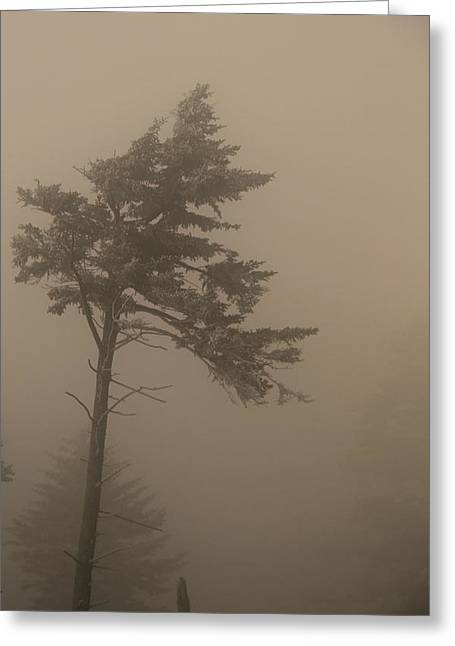 Misty Pine Photography Greeting Cards - Tree In Fog Greeting Card by Dan Sproul