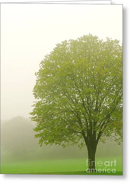 Leafy Greeting Cards - Tree in fog Greeting Card by Elena Elisseeva
