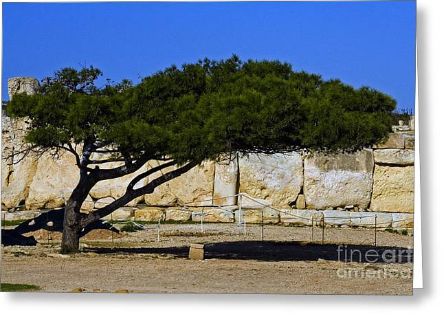 Ancient Ruins Greeting Cards - Tree In Front Of Hagar Qim Stone Temple Greeting Card by Tim Holt