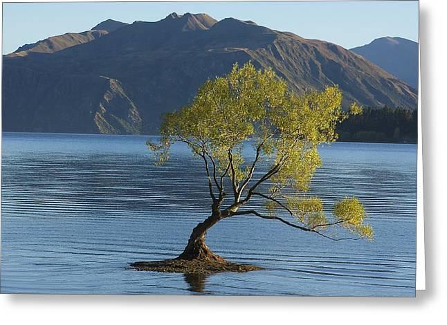 Fall Trees Greeting Cards - Tree in Lake Wanaka Greeting Card by Stuart Litoff