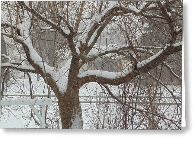 Snowstorm Framed Prints Greeting Cards - Tree in Michigan SnowStorm Greeting Card by Dotti Hannum