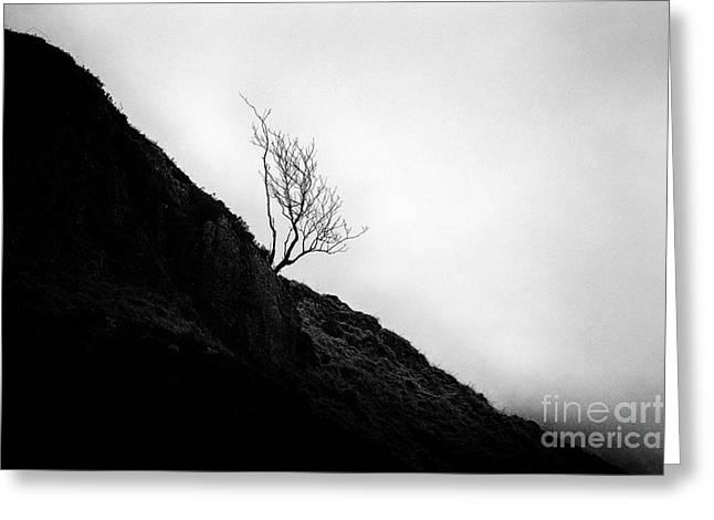 Glencoe Greeting Cards - Tree in mist Greeting Card by John Farnan