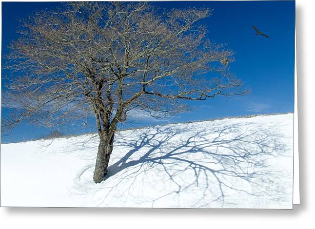 Abstract Art For Sale Digital Art Greeting Cards - Tree in Snow in the Blue Ridge I Greeting Card by Dan Carmichael