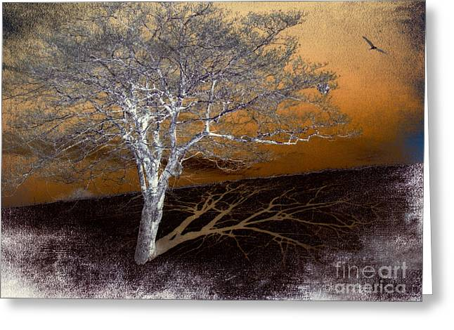 Abstract Art For Sale Digital Art Greeting Cards - Tree in Snow in the Blue Ridge III Greeting Card by Dan Carmichael