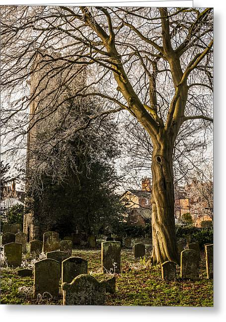 St Mary Magdalene Photographs Greeting Cards - Tree in St Mary Magdalenes church yard Greeting Card by David Isaacson