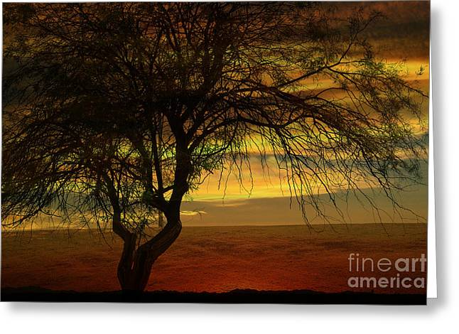 Sunset Framed Prints Digital Greeting Cards - Tree in the Hot Desert Greeting Card by Beverly Guilliams