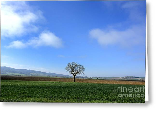 Tranquil Scene Greeting Cards - Tree isolated in agricultural landscape. Auvergne. France. Greeting Card by Bernard Jaubert