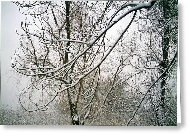 Snow-covered Landscape Pyrography Greeting Cards - Tree Lace Greeting Card by Desline Vitto