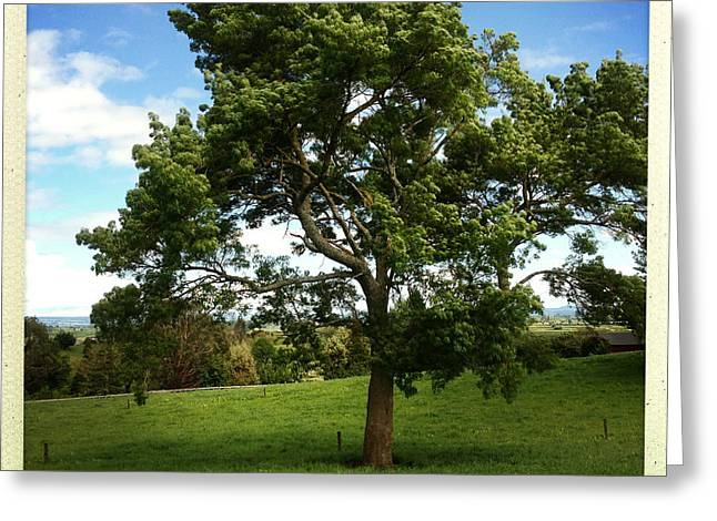 Big Tree Greeting Cards - Tree Greeting Card by Les Cunliffe