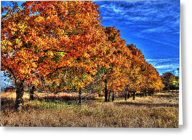 Outlook Greeting Cards - Tree Line Fall I Greeting Card by Roger Passman