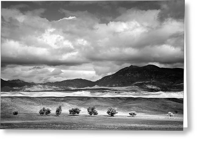 Big Sky Greeting Cards - Tree Line Greeting Card by Peter Tellone