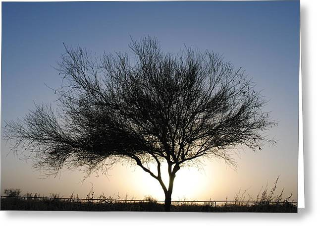 Edward Curtis Greeting Cards - Tree line Silhouette  Greeting Card by Edward Curtis