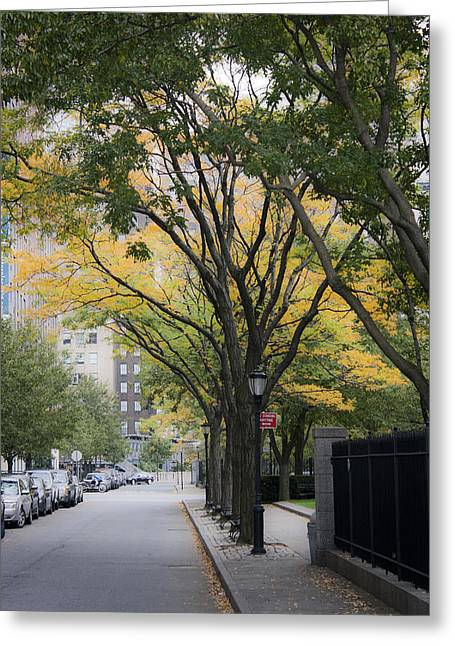 Metro Park Greeting Cards - Tree Lined Avenue Greeting Card by Teresa Mucha