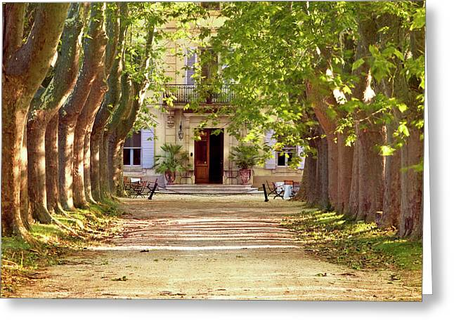 Tree-lined Drive To Villa Near Saint Greeting Card by Brian Jannsen