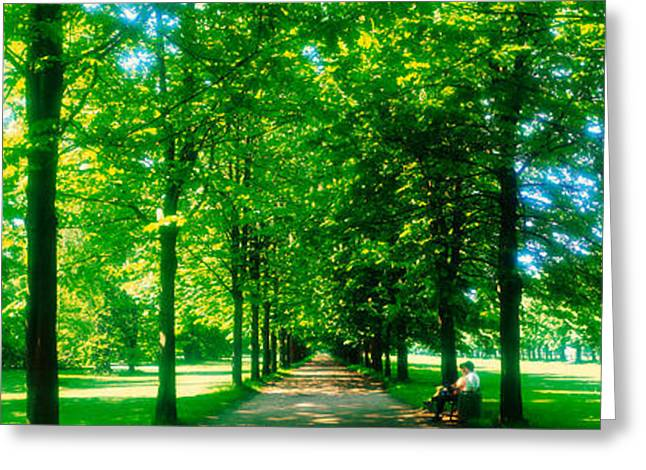 Europe Greeting Cards - Tree-lined Road Dresden Vicinity Germany Greeting Card by Panoramic Images