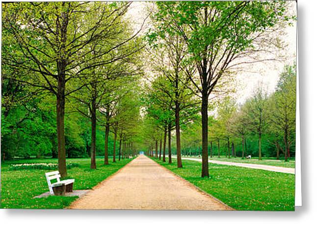 Tree Lines Greeting Cards - Tree-lined Road Hessen Kassel Vicinity Greeting Card by Panoramic Images