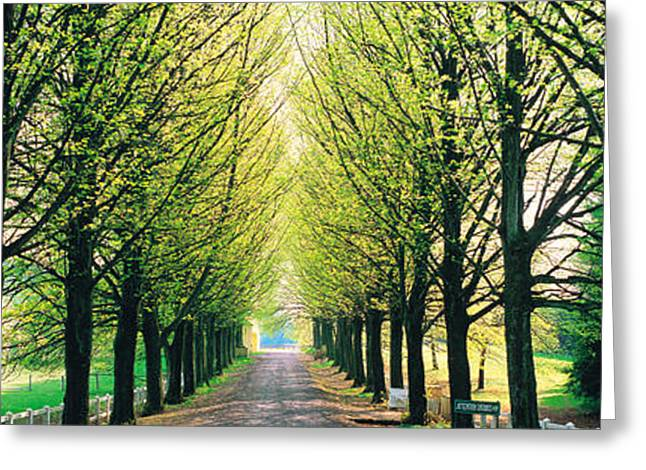 Tree Lines Greeting Cards - Tree-lined Road Libin Vicinity Belgium Greeting Card by Panoramic Images