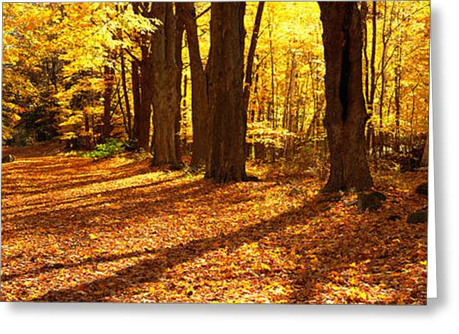 Tree Lines Greeting Cards - Tree Lined Road, Massachusetts, Usa Greeting Card by Panoramic Images