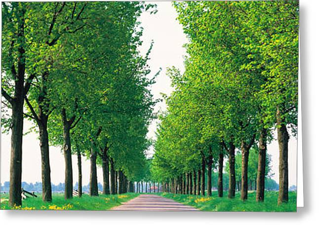 Tree Lines Greeting Cards - Tree-lined Road Noord Holland Edam Greeting Card by Panoramic Images