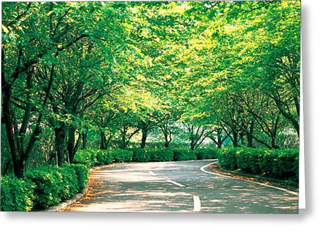 Osaka Greeting Cards - Tree Lined Road Osaka Shijonawate Japan Greeting Card by Panoramic Images