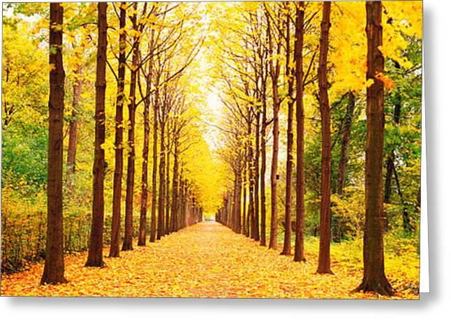 Tree Lines Greeting Cards - Tree-lined Road Schwetzingen Germany Greeting Card by Panoramic Images
