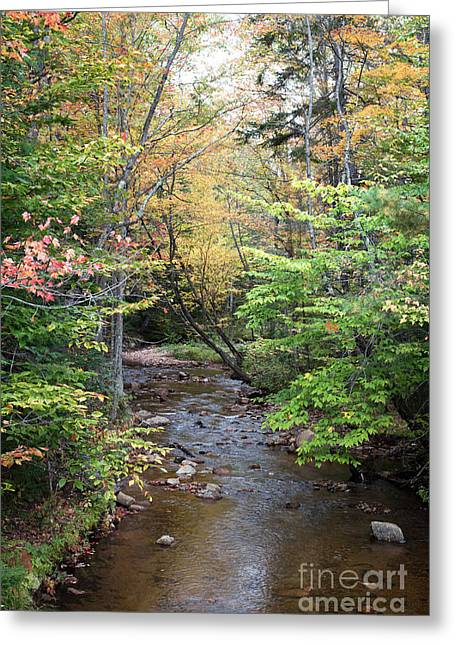 Fall Trees With Stream. Greeting Cards - Tree-lined stream near Kancamagus Highway New Hampshire Greeting Card by Carol Barrington