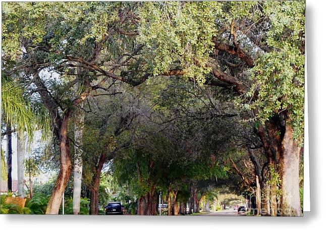 Overhang Greeting Cards - Tree Lined Street in Florida Greeting Card by Debb Starr