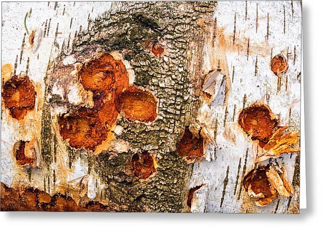 Warm Tones Greeting Cards - Tree log detail - beautiful wood structure Greeting Card by Matthias Hauser