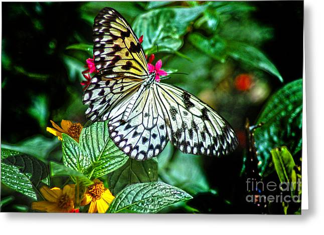 Tickseed Greeting Cards - Tree Nymph 2 Greeting Card by Diane E Berry