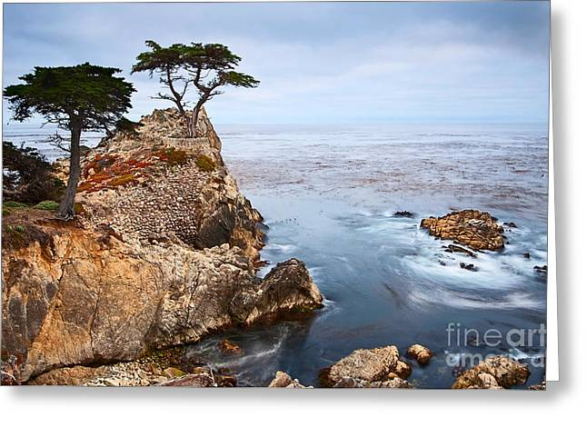 Foggy Beach Greeting Cards - Tree of Dreams - Lone Cypress tree at Pebble Beach in Monterey California Greeting Card by Jamie Pham