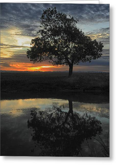 Reflection.etc Greeting Cards - Tree of life 2 Greeting Card by Mark Anthony Bansag